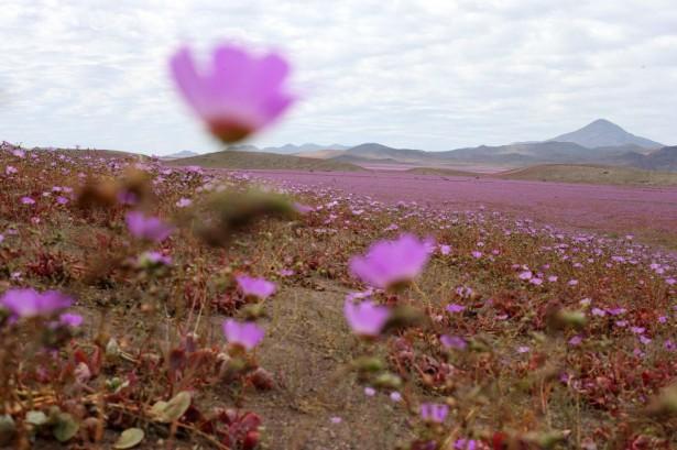 Atacama2